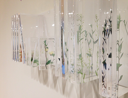 神戸薬科大学 -permanent installation 2013