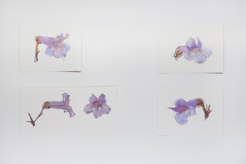 <b>キリ ノ ハナ ヲ ミル looking at the flower of the paulownia</b>  print and drawing 2011-14<br><font size=1.5>「中学生の頃だったと思うが、桜の花を観察して描くという宿題がでたことを憶えている。<br>美術ではない、理科の時間だ。ヨク観察して描く。理科の時間を思いだし、キリのハナを描いた。」