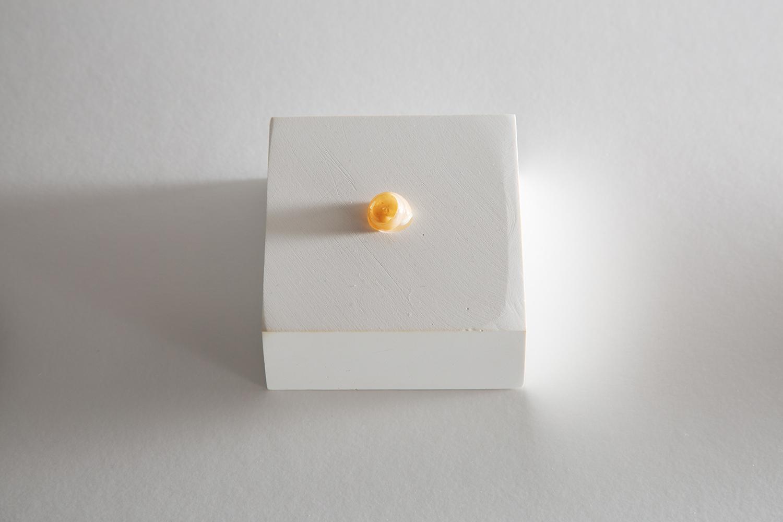 <b>イケル/カタツムリ arrange/ snail</b> カタツムリの殻、石膏 shell of nail, plaster 2010<br><font size=1.5>「庭でシロイ殻をみつける。宿主は居らず、ヤドカリではないはずだし、たぶん亡骸。かつてはイキモノだったモノが薄い雲母にみえた。」