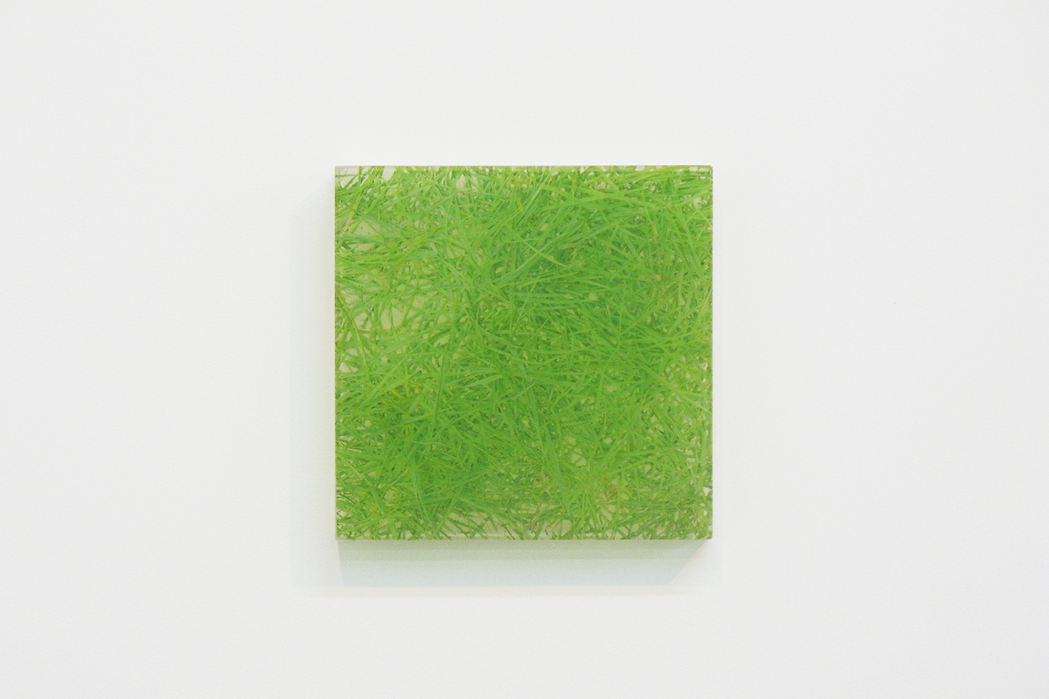 Photo painting [叢 grass 06-10.12],  oil on polyester resin panel and mixed media, 22.6 × 22.6 cm, 2006