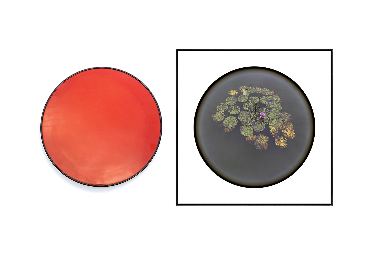 盆花/Bon flower|Lambda silver halide print, acrylic plate, iron, tray|photo: 450 x 440 x 25mm, tray:355 x 355 x 20 mm|2019<br>¥150,000-280,000