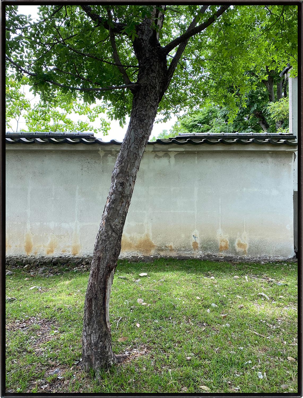 瓦の眺め/View of roof tile|Lambda silversalt print, acrylic board, iron|515 x 390 x 25 mm|2020<br><br>塀の瓦が一部欠損している。その箇所に重なるように樹木が伸びていた。<br>それぞれはもともともともと何の関係もないが、僕の眼がこの位置に来たとき急に関係を持ってしまった。<br>そういう風景。