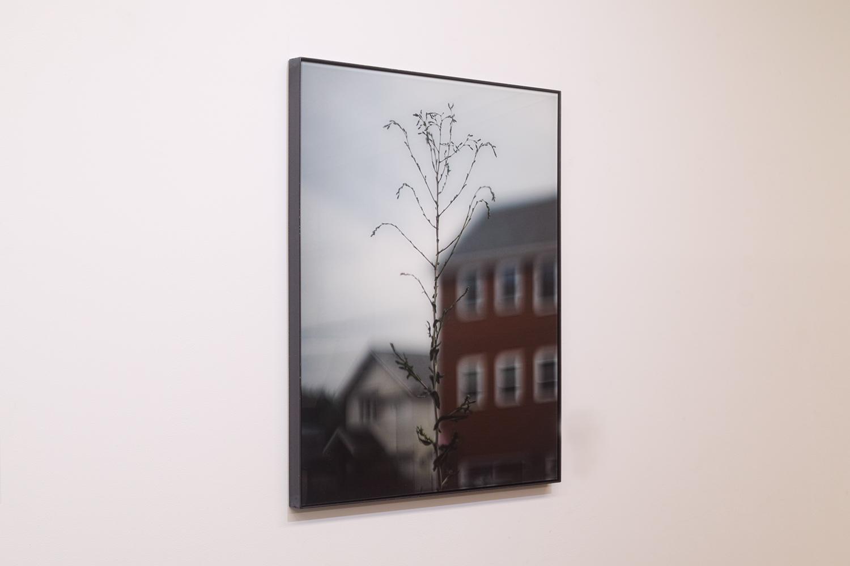座標軸を探せ/Look for the coordinate axis|Lambda silversalt print, acrylic board, iron|615 x 460 x 25 mm|2019<br><br>背景の建物のかたちを、手前の植物がなぞっているように見える。そんなふうに見える自分の眼の位置を探すのが面白い。<br>一眼レフカメラはそういう目的の撮影に向いている。僕がレンジファインダーカメラを使わない理由だ。
